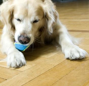 """Sind Kratzspuren durch Hunde bei Mietwohnungen """"normale Abnutzung""""?"""